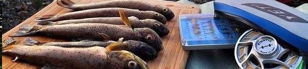 Рыбаки любители