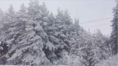 Зима в Лисках.jpg